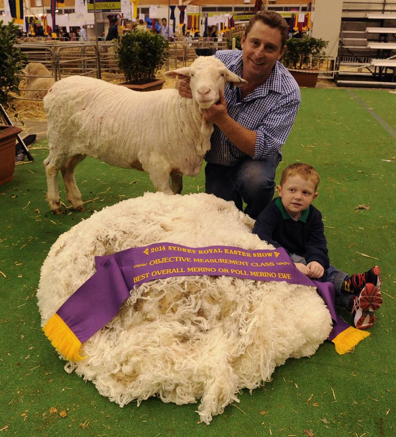 Michael Corkhill and son Toby, 4, Grassy Creek stud, Reids Flat awarded with the Best Overall Merino or Poll Merino Ewe in the Objective Measurement Class