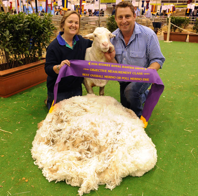 Michael and Jane Corkhill, Grassy Creek stud, Reids Flat having been awarded with the Best Overall Merino or Poll Merino Ewe in the Objective Measurement Class