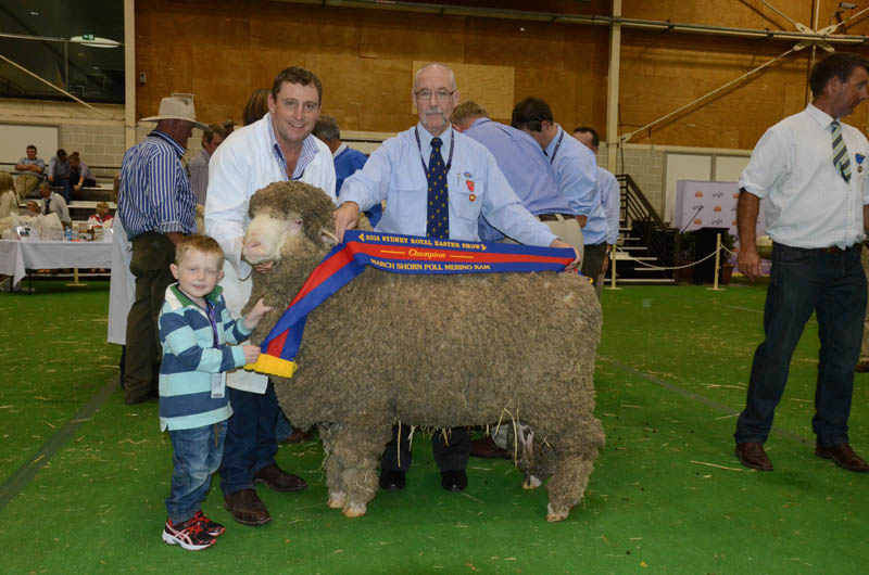 Grassy Creek stud, Reids Flat exhibited the champion March shorn Poll Merino ram and is held by stud principal, Michael Corkhill with three-year-old son, Toby, while John Gray, Schute Bell Badgery Lumby, Sydney presents the ribbon. The ram was later judged grand champion fine wool Poll Merino ram.