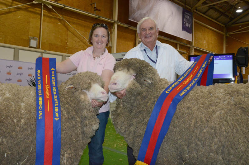 Fine wool classes delivered both March shorn champion ewe and ram for Grassy Creek stud, Reids Flat. Pictured is the stud's co-principal Jane Corkhill holding the ewe while her father, Roger Webster holds the ram.