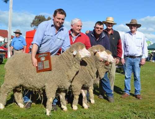 Harden 2016 – winning pen of 3 rams